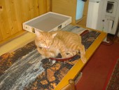 Сковородочный котейка Наташи (Чиюки)